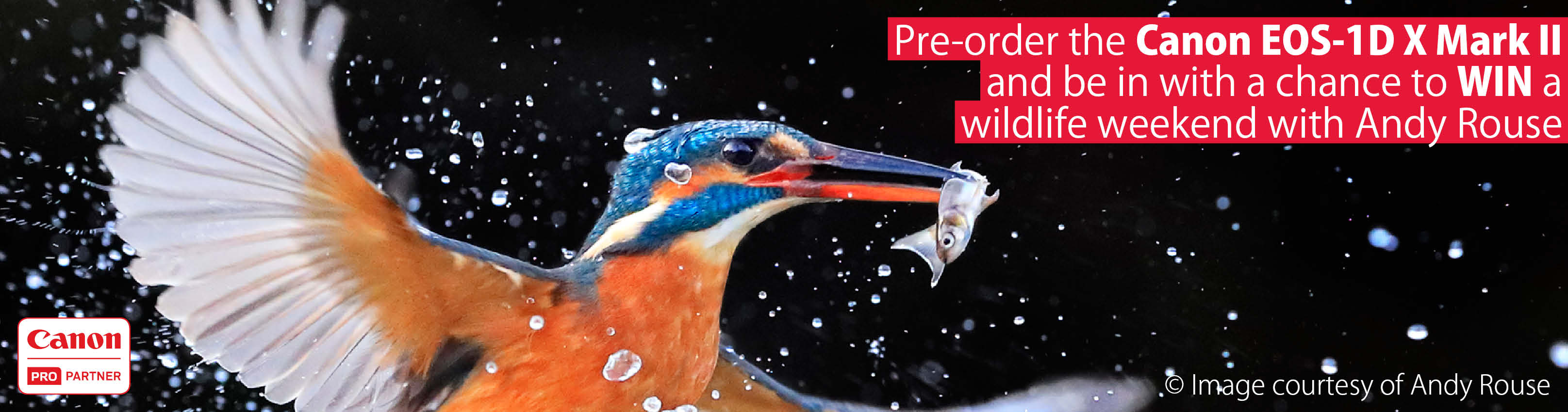 Win a wildlife photography weekend with the Canon EOS-1D X Mark II