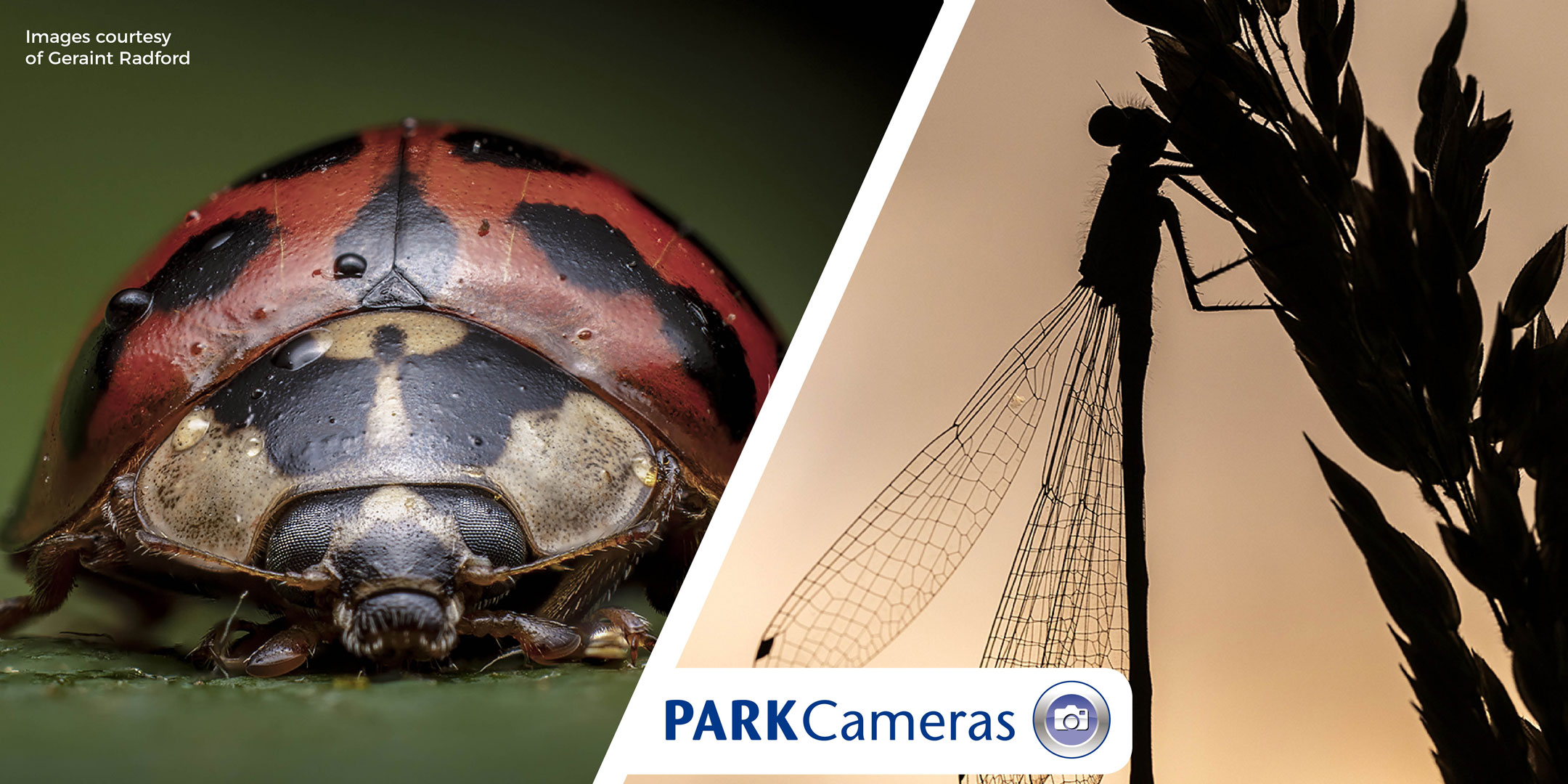 Photographing the Macro World; with Geraint Radford