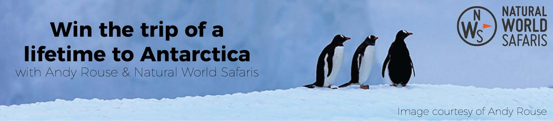 Win a 14 day trip to Antarctica with Andy Rouse and Natural World Safaris