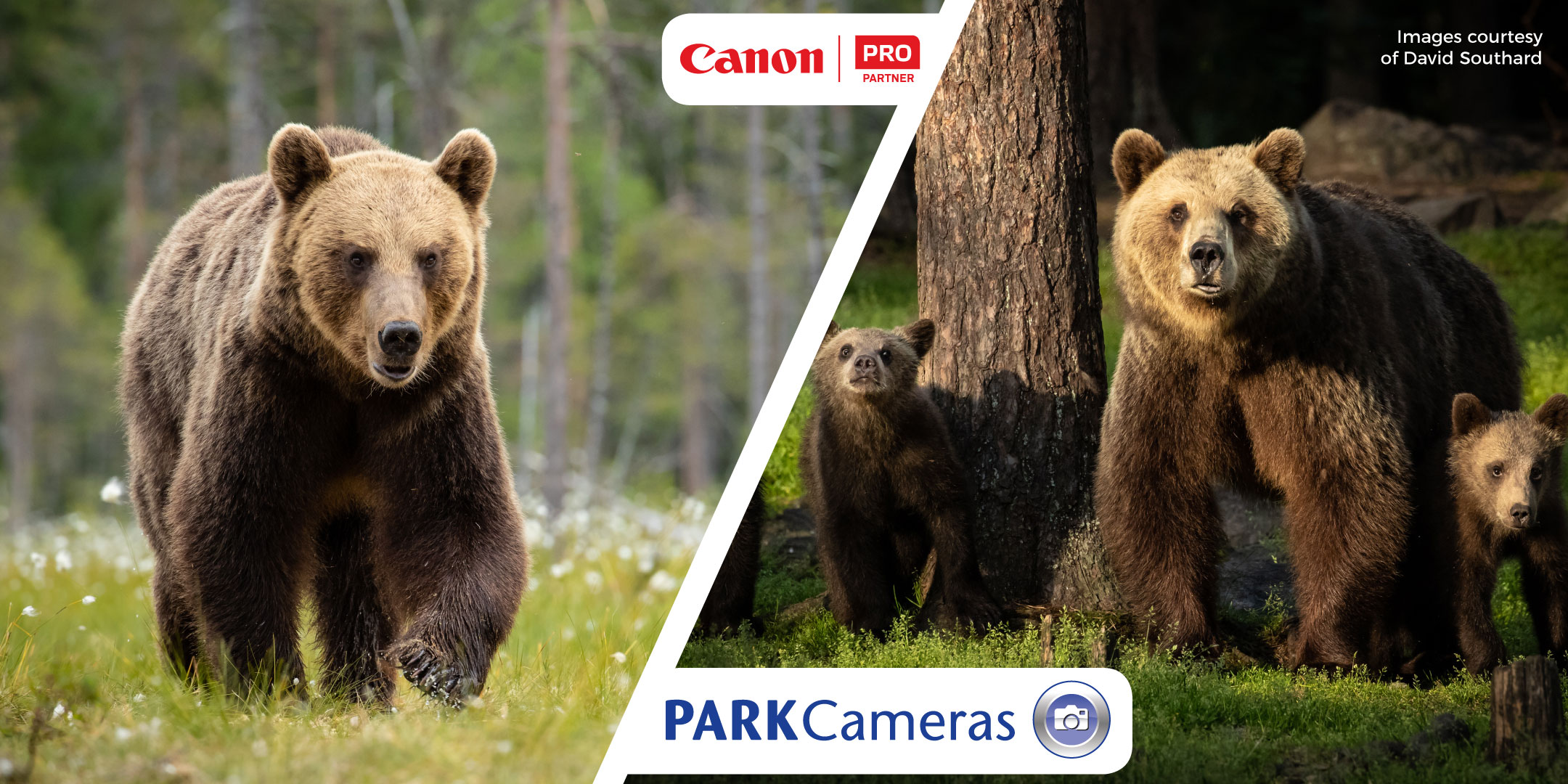 Adventures with Finnish Brown Bears