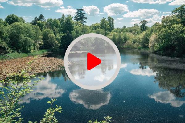 Park Cameras Video