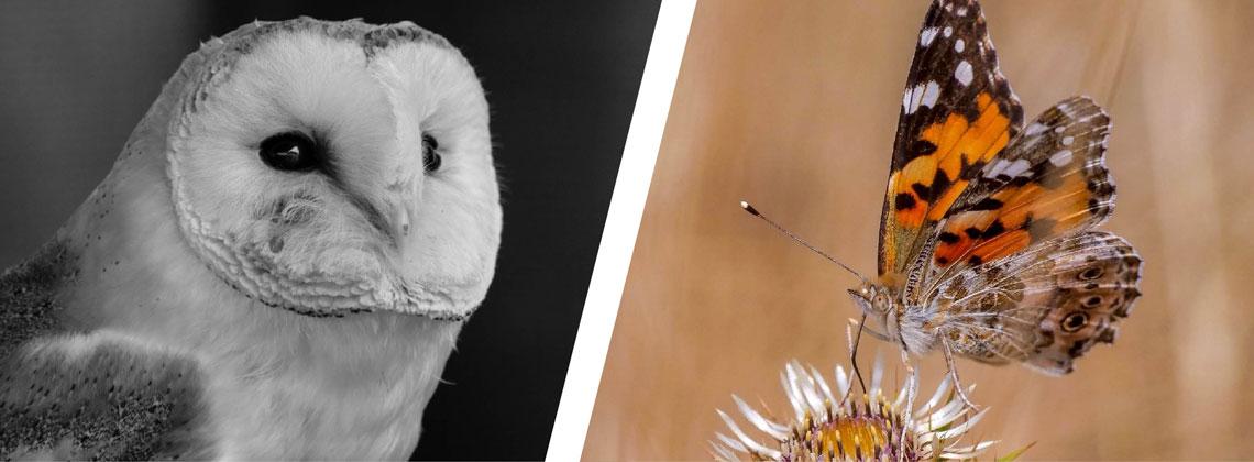 Wildlife Day - 21st September 2019