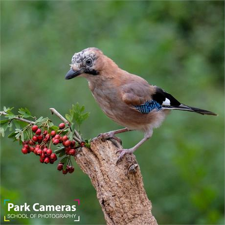 School of Photography Introduction to Bird Photography Image 1