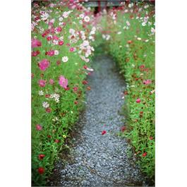 Kodak Ektachrome Prof E100 135-36 Thumbnail Image 4