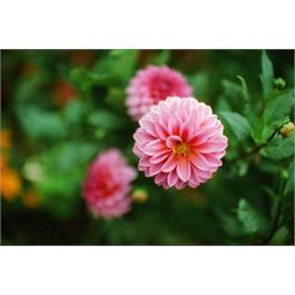 Kodak Ektachrome Prof E100 135-36 Thumbnail Image 3