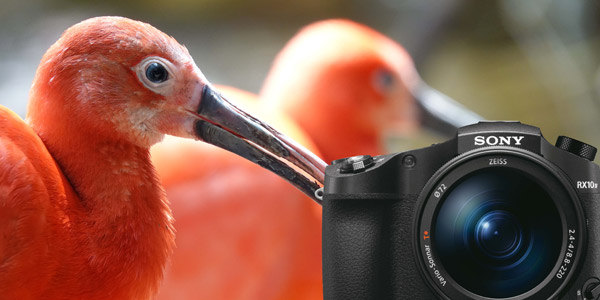Expand your photographic potential with Sony