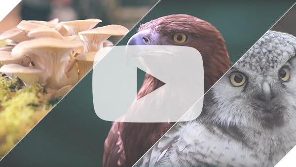 wildlife day video